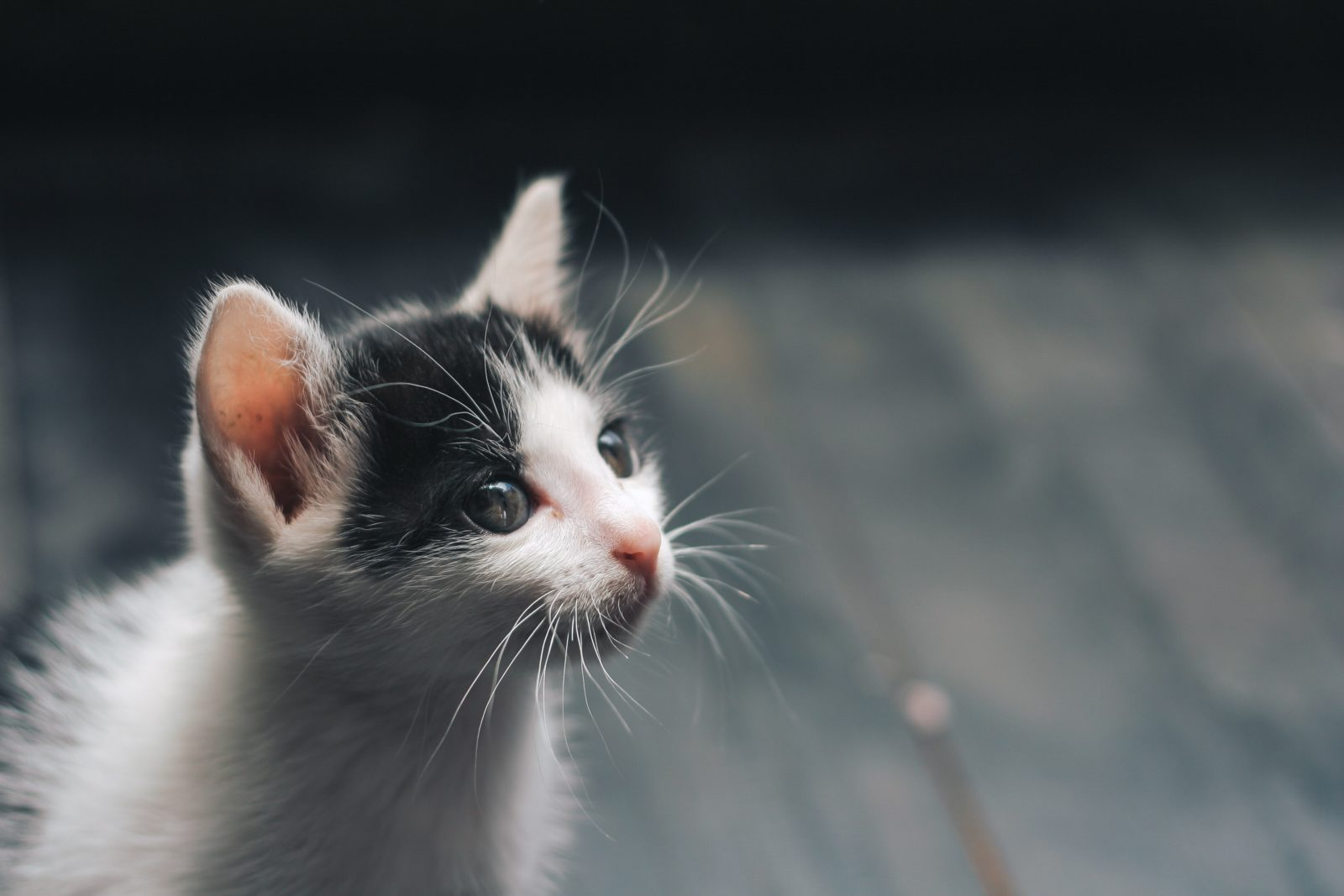 Cat Accessories Every pet owner should have.