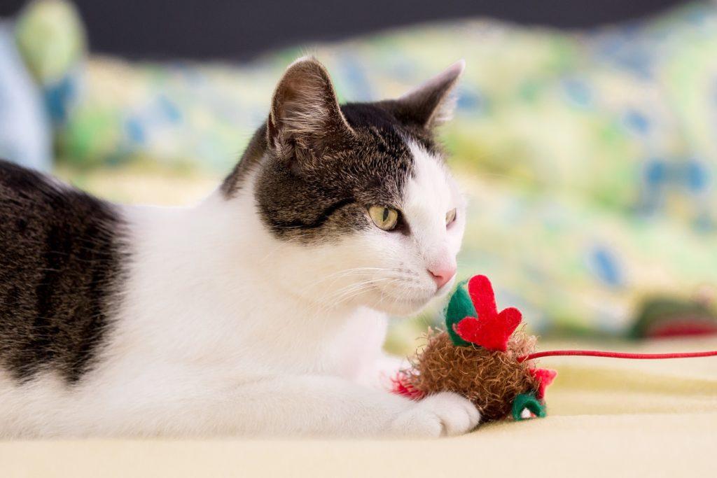 How do cat toys help